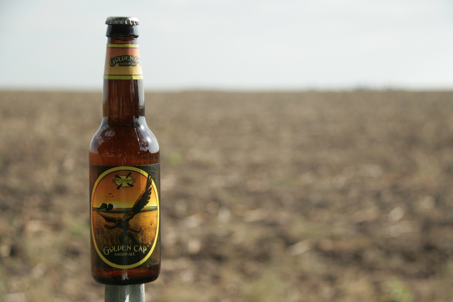 Golden Cap craft summer farmhouse ale is perfect for hot months.