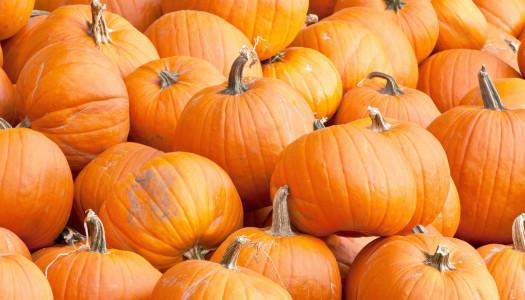 Fall Pumpkin Beer