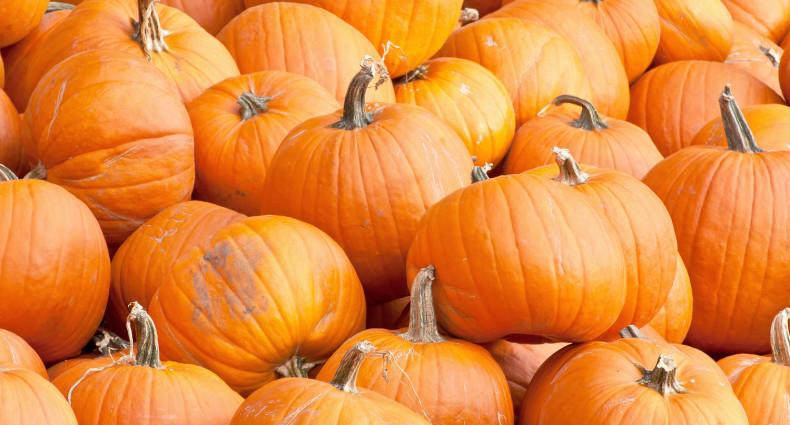 Drink pumpkin beer in the fall season.