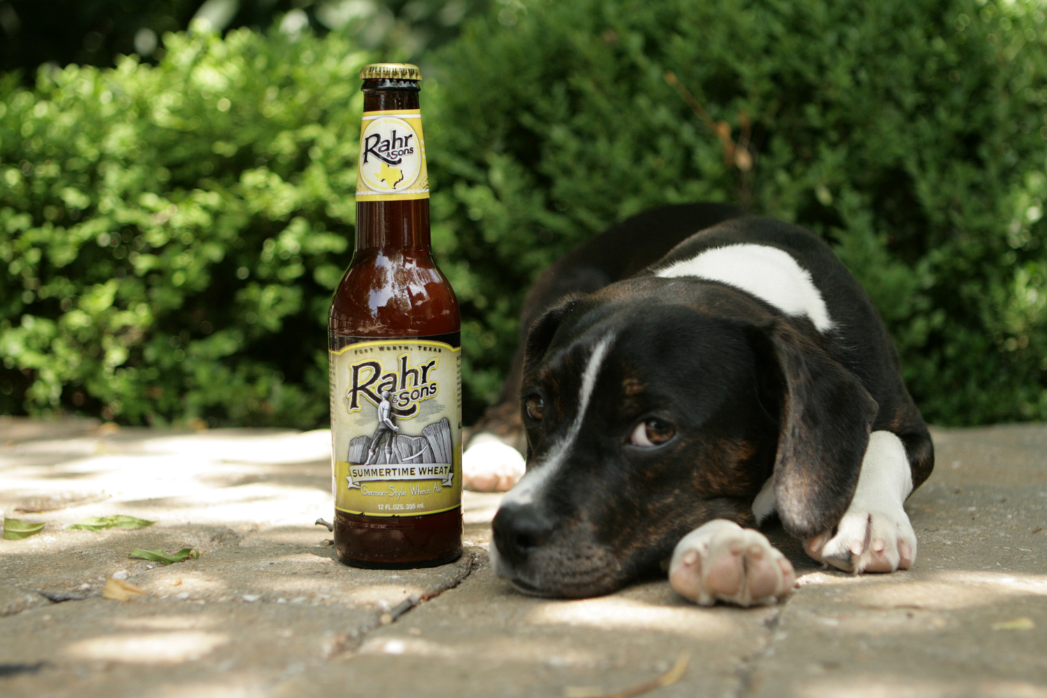 Drink Summertime Wheat beer from Rahr during the dog days of summer.
