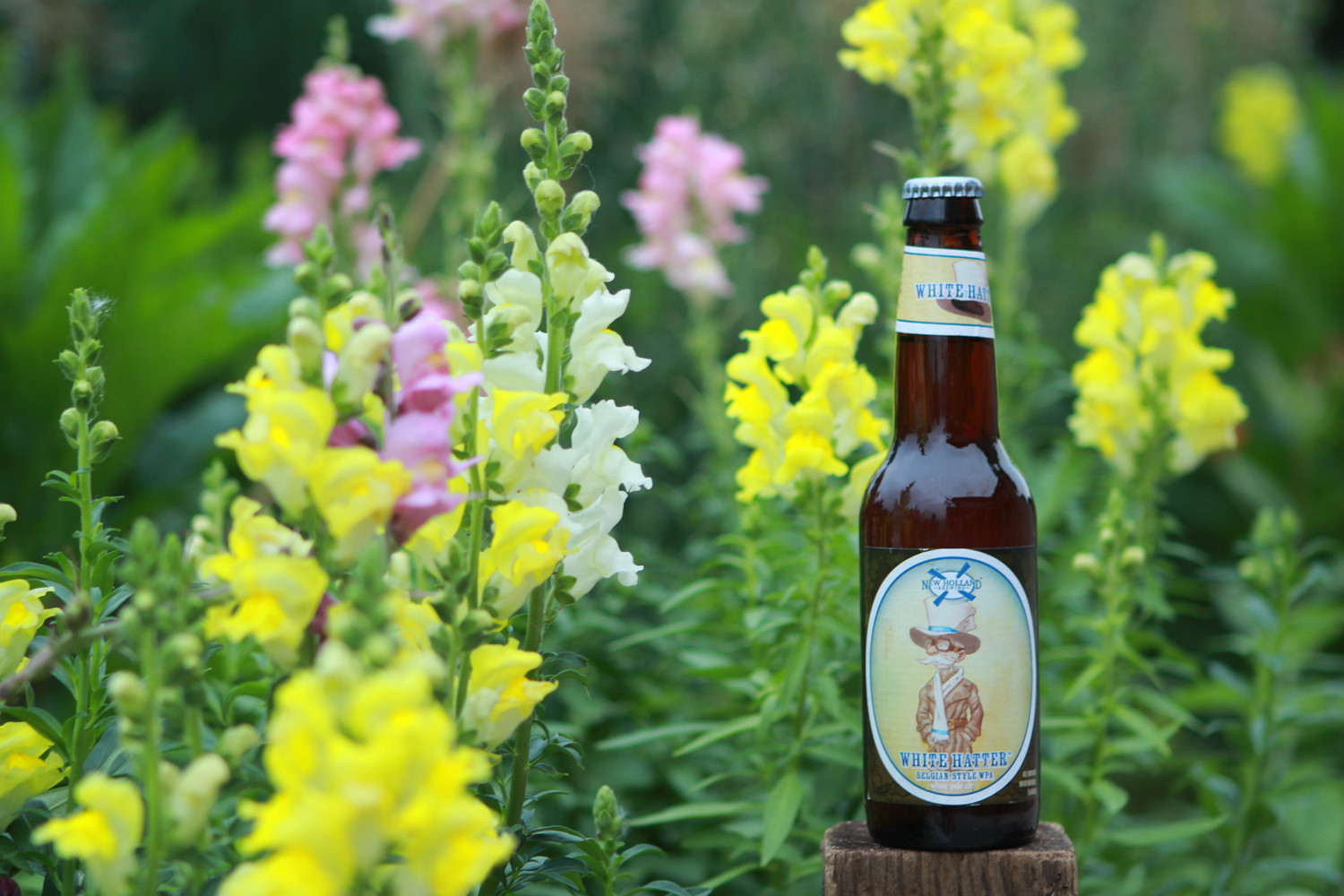Summer beer White Hatter from New Holland.